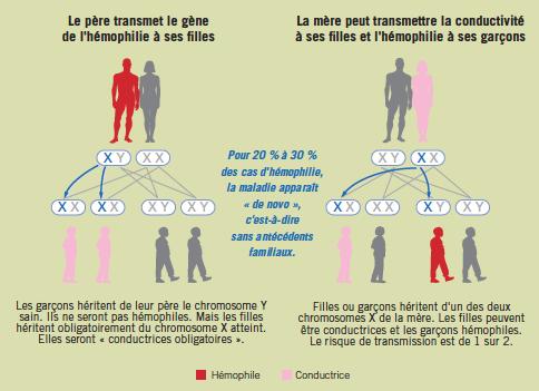 Transmission de l'hémophilie et femmes conductrices